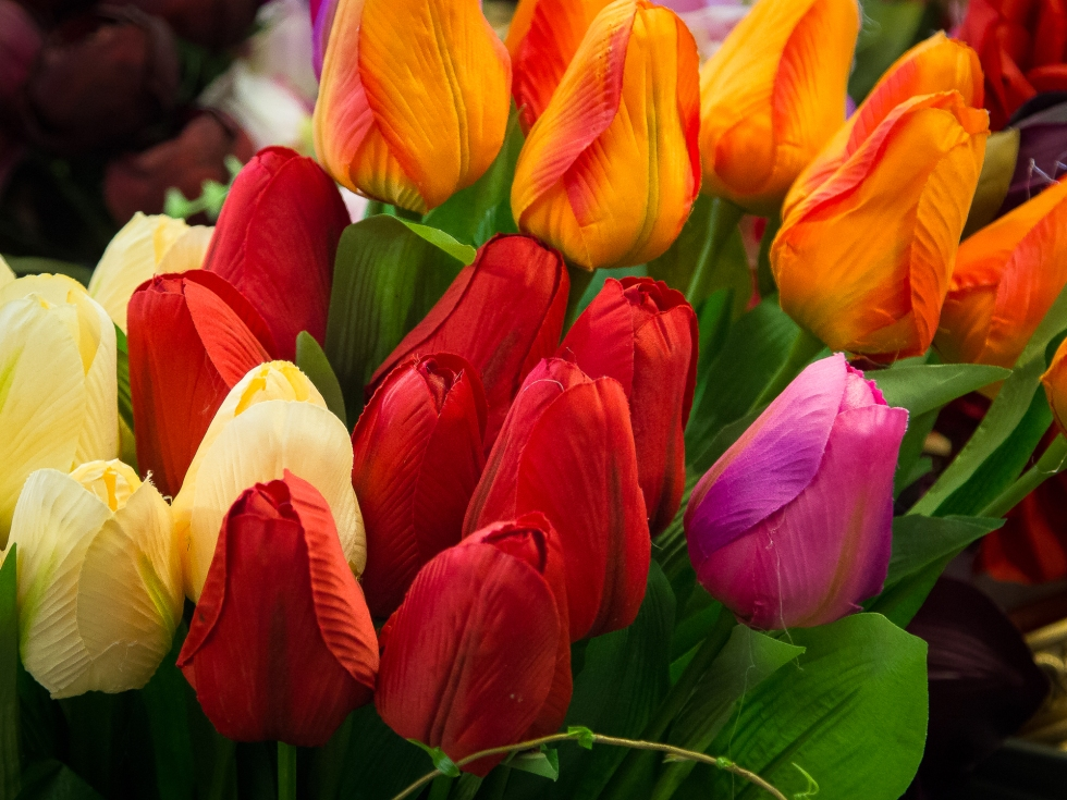 A bunch of tulips of various colourful hues in a Polish market