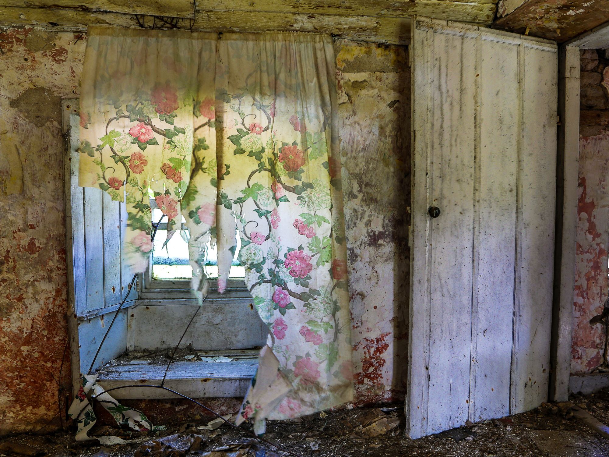 Faded, torn rose curtains billow in a derelict cottage in Ireland