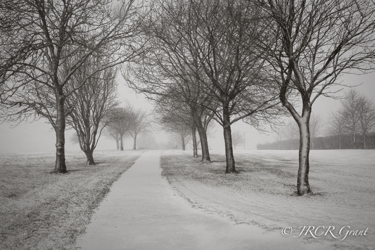 Snow sticks to the trunks of trees as a cold wind blows in from the East