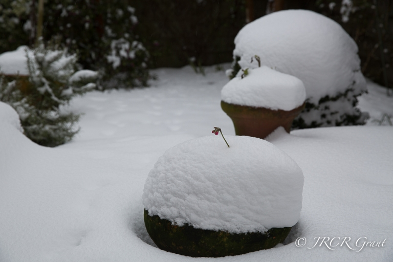 Snow causes shapes in the garden