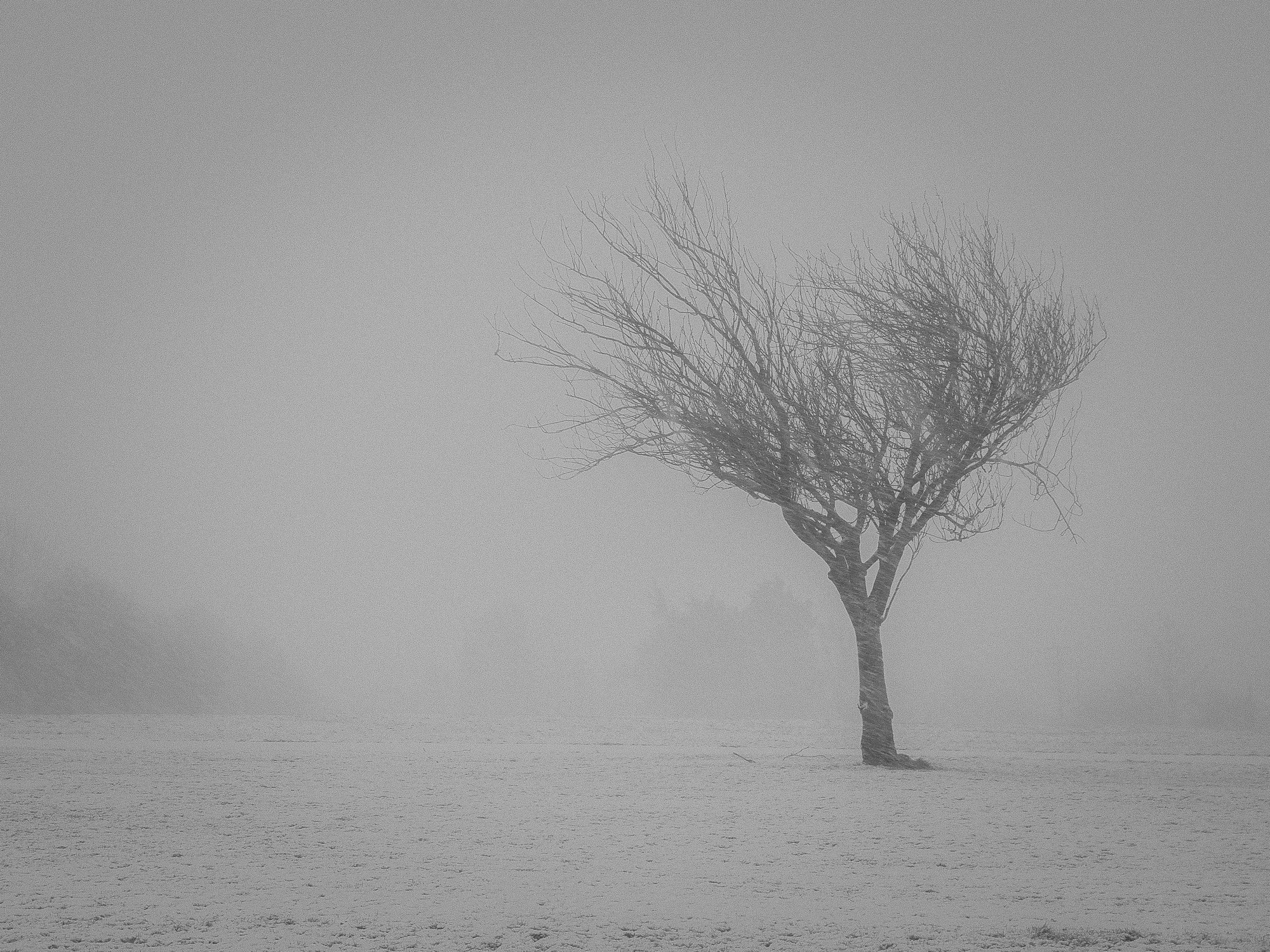 A cold Easterly wind blows through a bare shivering tree in a Cork City park