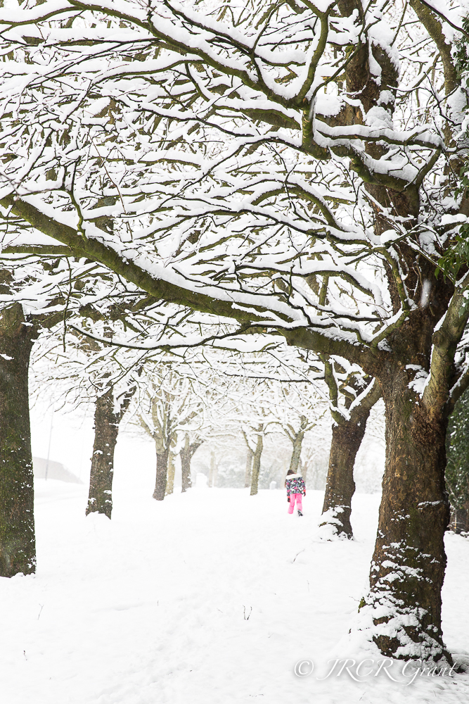 A young girl plods her way through snow, burdened branches hang above her