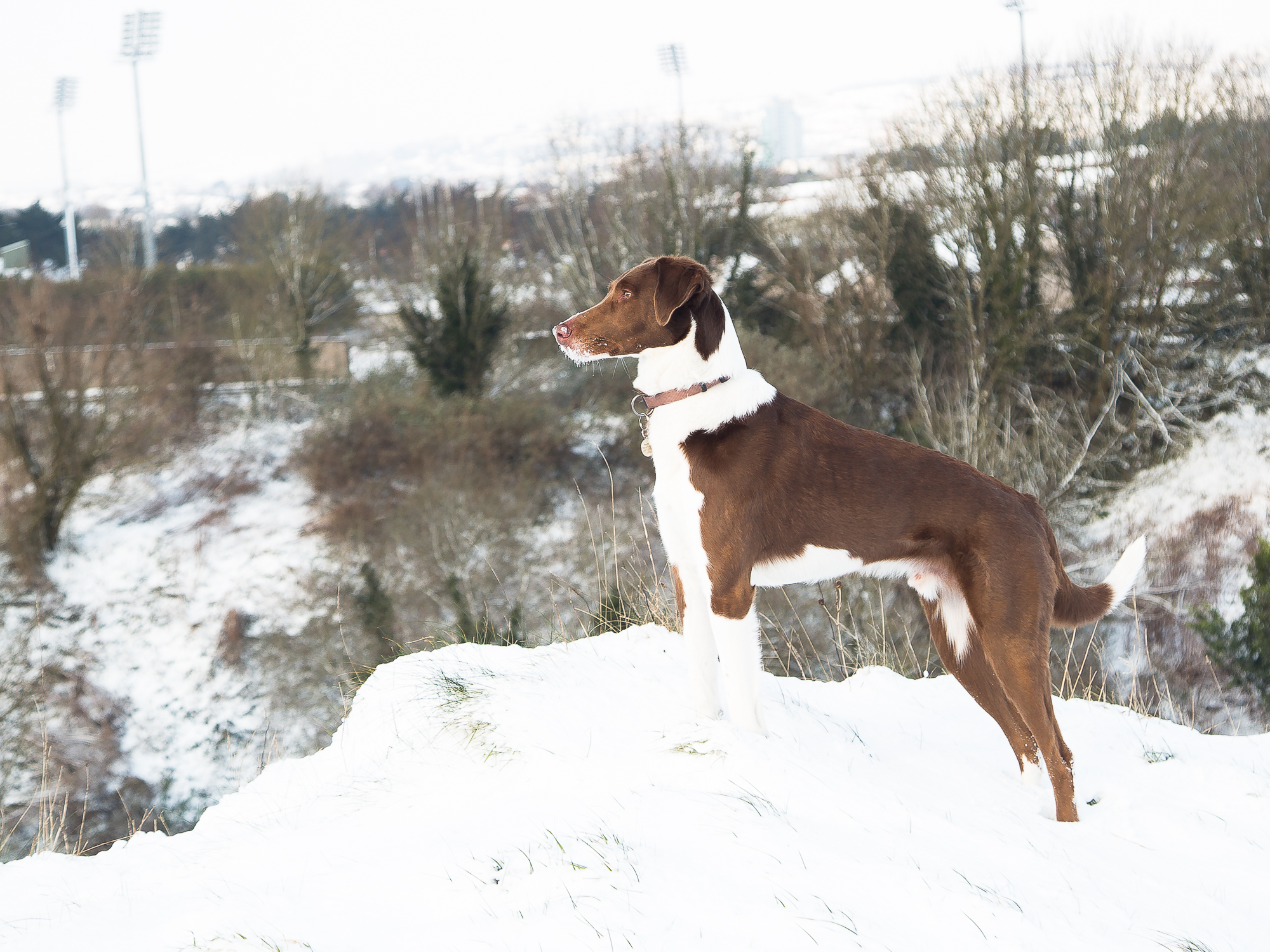 A hound keeps watch in the snow