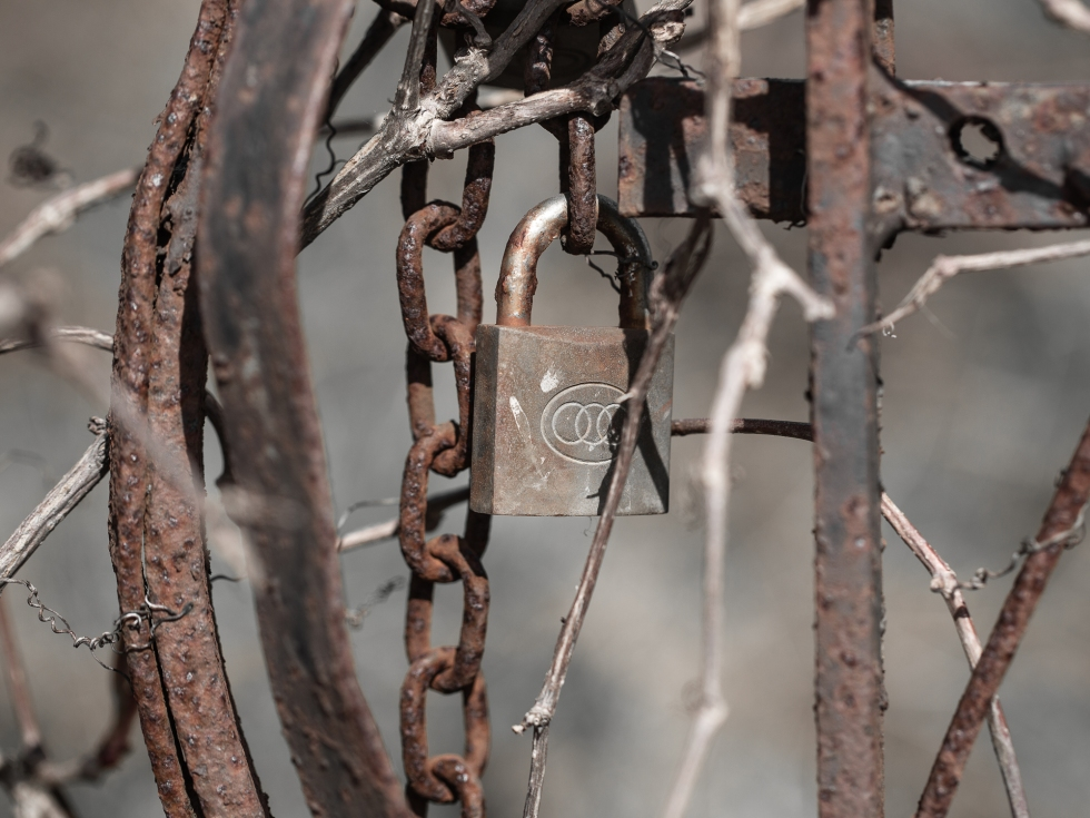 A Padlock hangs on the end of a chain while vines serve to lock the old gate to its upright post