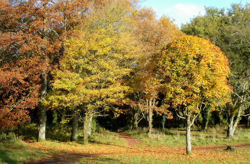 Trees of different autumnal shades line the path of a park in Cork City