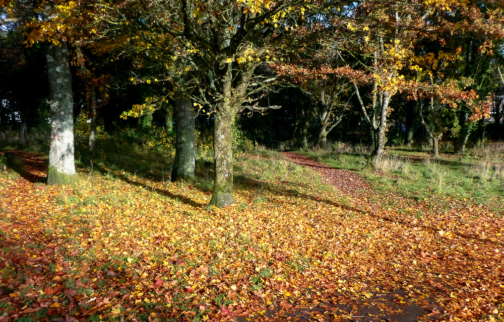 A colourful carpet of leaves is picked out by the low morning sun
