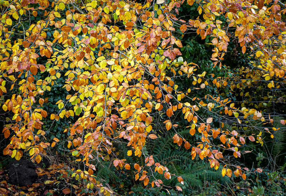 leaves like coloured coins cling on to the branches of a tree