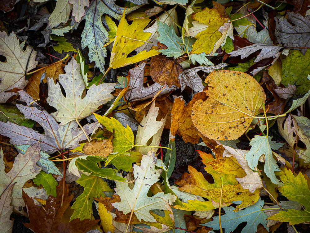 Leaves of many shapes and colours lie on the ground