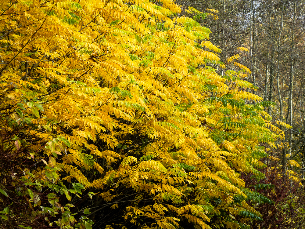 A tree of yellow and green leaves stands out