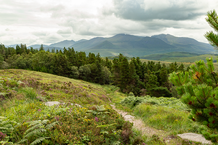 Spur Path and The Reeks